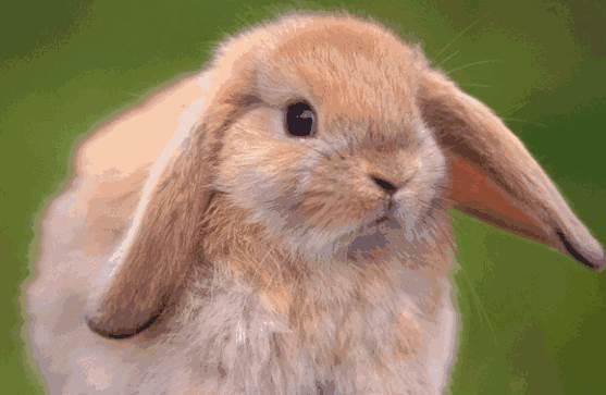 87年的属兔女会给丈夫带来什么影响?会不会旺夫?-生肖兔-风