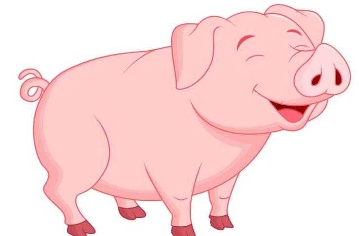 什么时辰出生的属猪人运势比较好?(上)-生肖猪-风水八字同城