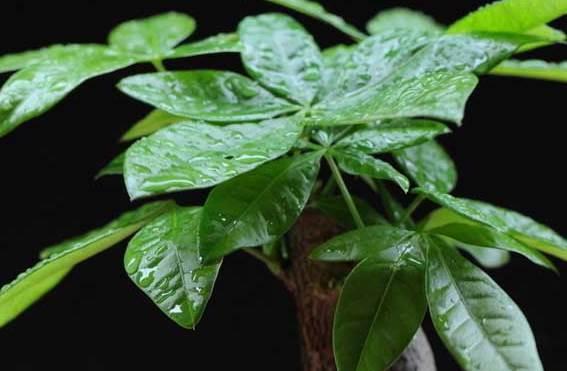 生肖龙养什么植物会改善运势?生肖龙适合养哪些植物?-生肖龙-