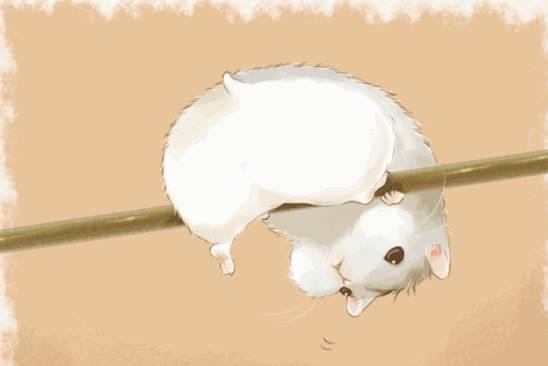 96年的属鼠人一生会有几次大灾?-生肖鼠-子鼠-风水八字同城网