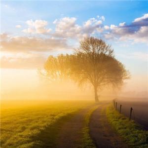 哪些木煞是会影响到我们生活的?(家居住宅周边有枯死或是病死的树木的话,那这就叫做枯木树)-风水八字同城网