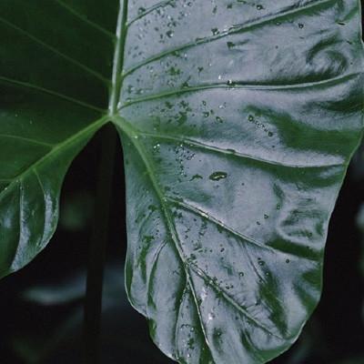 在客厅养植物要注意哪些风水讲究?(在客厅摆放的植物一定不能太大,要以中小型的为主,不然的话就会给人一种压迫感)-风水八字同城网