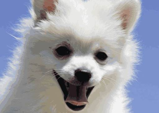 出生在农历六月的生肖狗命运怎么样?-生肖狗-风水八字同城网