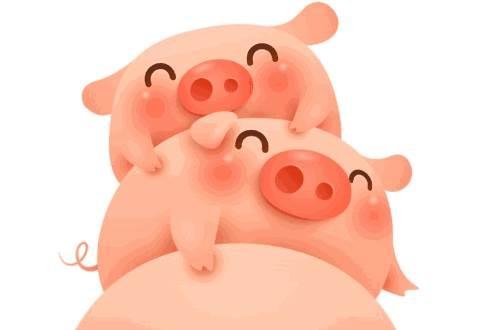 出生在农历八月的生肖猪命运怎么样?-生肖猪-风水八字同城网