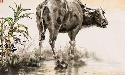 属牛的男人一定要来看一下,千万不要被戴绿帽子-风水八字同城网
