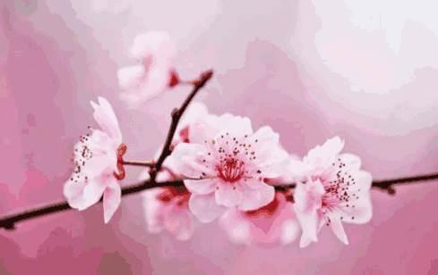 通过指纹看自己的桃花运好坏-面相算命-风水八字同城网
