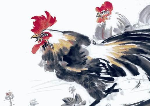 鸡是怎么排进十二生肖的? 生肖鸡的传说-生肖鸡-风水八字同城
