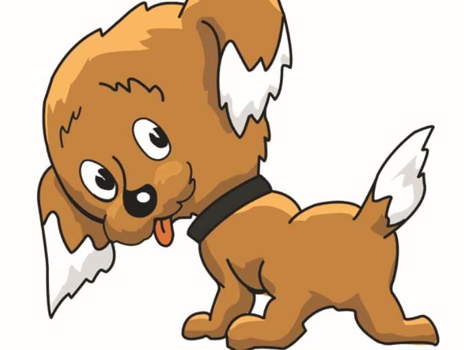 能让属狗人在职场脱颖而出的植物-生肖狗-戌狗-风水八字同城网