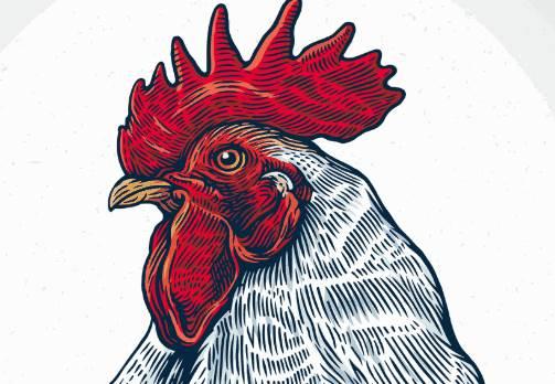 生肖鸡的贵人一般是什么属相?-生肖鸡-风水八字同城网