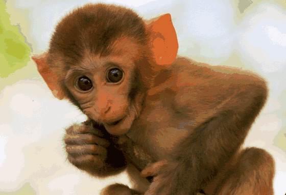 生肖猴如何在职场上顺风顺水?生肖狗职场成功秘笈-生肖猴-风水