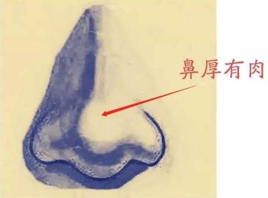 面相学:好鼻相应该具备的特征-风水八字同城网