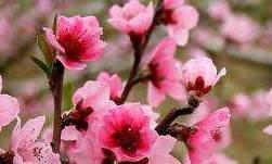 人都想有好的桃花运和姻缘,哪些饰品可以招揽桃花呢?-风水八字同城网