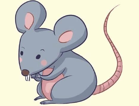 2020年属鼠人本命年的幸运色-生肖鼠-子鼠-风水八字同城网