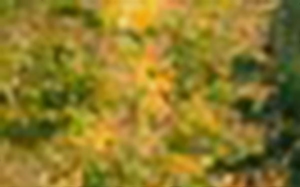 八字婚姻:八字婚姻宫代表着什么?-风水八字同城网